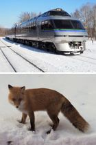 JR北海道の車両「クリスタルエクスプレス」(上)と、道中で見えたキタキツネ=2018年1月28日、北海道弟子屈町