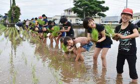一列になって苗を植える大根占小学校の5年生=錦江町馬場