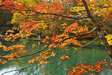 秋色、見頃迎える 蔵王ドッコ沼が紅葉