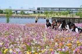 筑後船小屋駅(奥)の前に広がる花畑