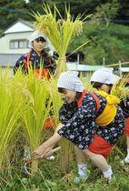 新嘗祭向け抜穂式 刈女ら献穀米収穫 高知県本山町