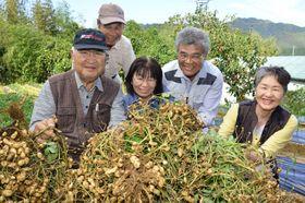 落花生の収穫に励む「ひだか落花生生産者会」メンバーら(日高村本郷)