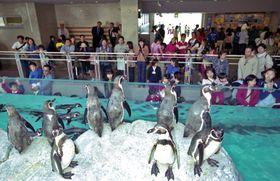 7種類、119羽のペンギンを飼育する長崎ペンギン水族館が市民の期待に応えオープン=長崎市宿町、長崎ペンギン水族館
