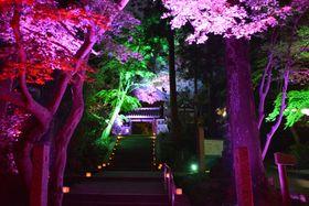 試験点灯で木々がさまざまな色に染まった岩船寺の参道(木津川市加茂町)=同市提供