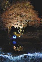 池に映る「逆さモミジ」が見られるライトアップ=飯田市上郷黒田の野底山森林公園で