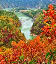 紅葉に彩られた第一只見川橋りょうを進む列車