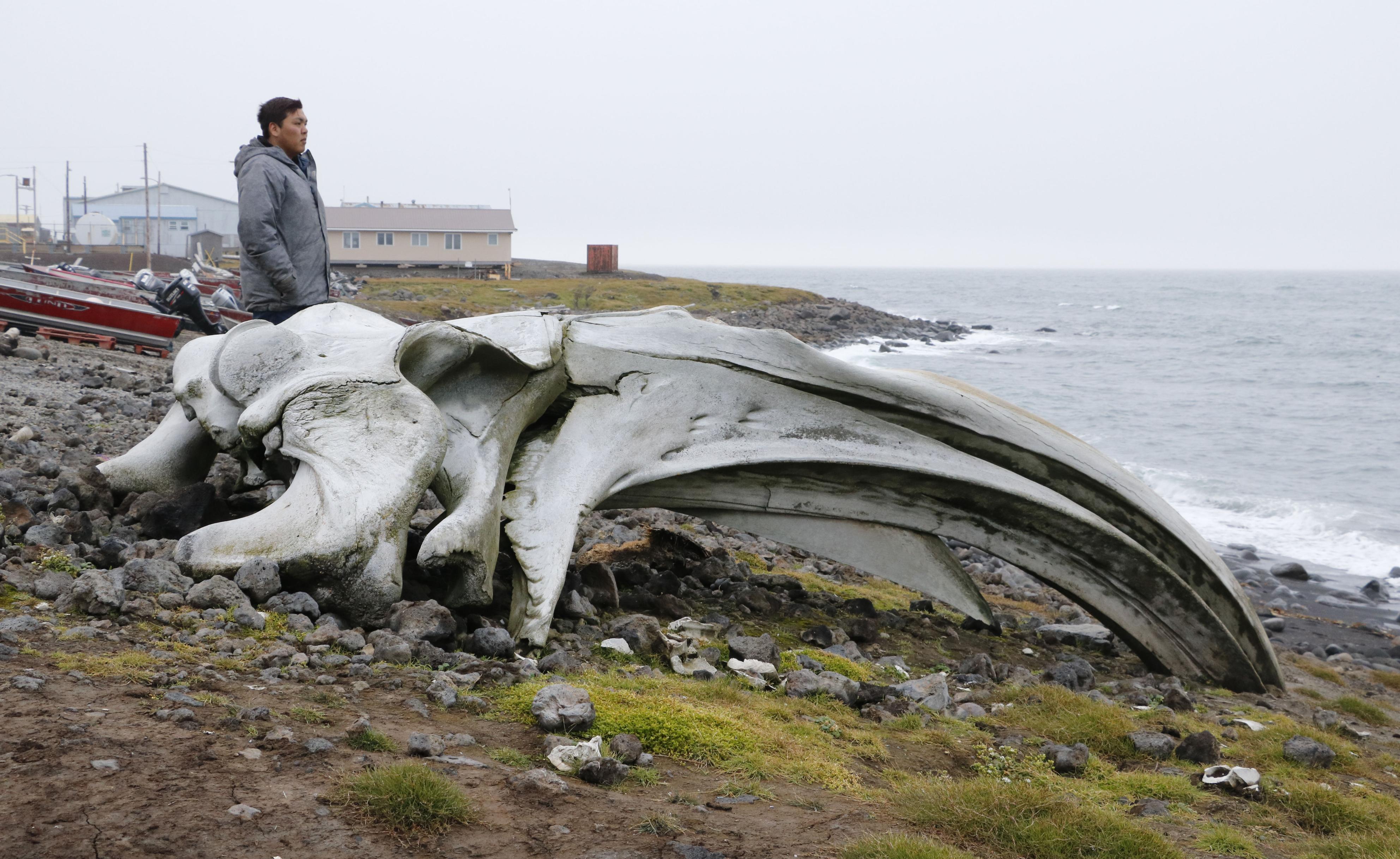米アラスカ州・セントローレンス島のサボオンガの海岸。ホッキョククジラの巨大な骨が横たわる。魚、セイウチ、クジラなど、海は食料を供給してくれる「農場」だと長老格の住民たちは話した=8月(共同)