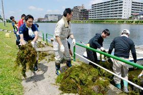ずっしりと思い水草を引き上げる戸田市の若手職員たち=戸田市の戸田ボートコース