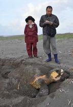 産卵したウミガメを見守る宮崎野生動物研究会新富南班のメンバー