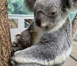 ココロに抱きかかえられた赤ちゃん=鹿児島市の平川動物公園(同園提供)