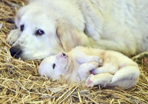 ドイツで、お母さんと一緒にくつろぐ生後3週間の犬の赤ちゃん(AP=共同)