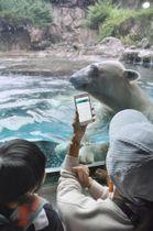 動物園のホッキョクグマの前でアプリの解説機能を使う来園者ら=20日午後、横浜市旭区のよこはま動物園ズーラシア
