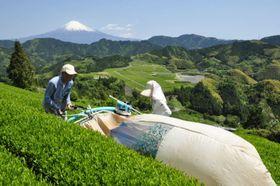 静岡市清水区の茶畑(静岡市提供)