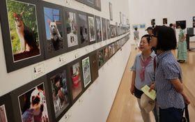 力作が並ぶネコ写真展コーナー=長崎市、県美術館