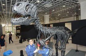 アロサウルスの標本を組み立てる日本通運の美術品専門チーム=青森市の東奥日報新町ビルNew'sホール