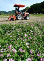 トラクターを使って田起こしをする農家=日置市吹上町与倉
