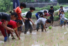 田植えに取り組む子どもたち=川棚町小串郷