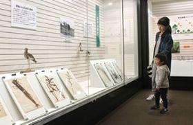 悠久山の自然の推移を紹介した企画展=長岡市幸町2の市科学博物館