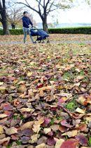子どもを連れて散歩する記者。地面の落ち葉などから、喫煙していた頃は分からなかった晩秋の薫りを感じる=福島市・荒川桜づつみ河川公園