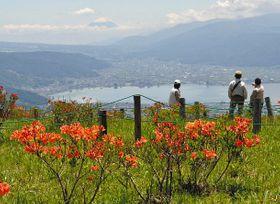 レンゲツツジの花と富士山、諏訪湖の景色を楽しむ観光客ら=塩尻市郊外の高ボッチ高原で