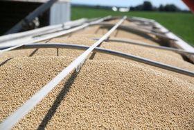 トレーラーに積まれた大量の大豆=7月、米イリノイ州(ロイター=共同)