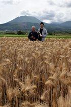 専用の在来種麦畑で収穫に立ち会った生産者の黒木親幸さん(左)と蔵元の柳田正さん
