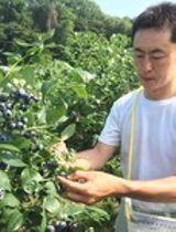 ブルーベリーが最盛期 佐久穂の農園、17日にカフェも