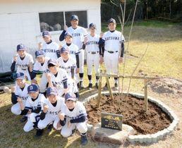 記念植樹したアオダモと薩摩中学校の野球部員たち=さつま町の同校