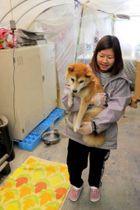保護している犬の世話をする、青い鳥動物愛護会のスタッフ
