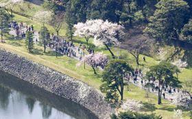 桜の見頃を迎え、一般公開が始まった皇居・乾通り=24日午前(共同通信社ヘリから)