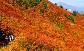 白山白川郷ホワイトロードから三方岩岳に続く登山道を進むと、赤や黄色に染まる山肌が広がる=11日午前11時7分、大野郡白川村