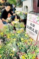 お盆用の菊が開花遅れ不足、高騰