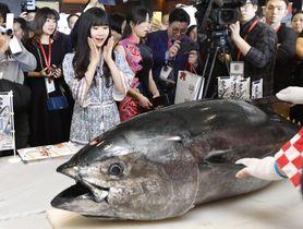 日本食の魅力を伝えるイベントで解体ショーのマグロを見つめる福原愛さん=9日、北京(共同)