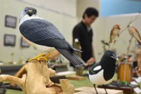 野鳥を生き生きと表現した作品が並ぶ、バードカービングと写真の展示会