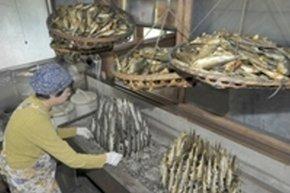ピークを迎えた焼きアユづくり=松崎町大沢の鮎の茶屋