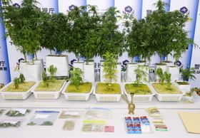 警視庁が押収した大麻草や乾燥大麻など=4月