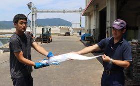 新上五島町で発見されたサケガシラ=有川町漁協