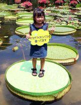 池に浮かぶパラグアイオニバスの葉に乗って記念撮影する子ども(滋賀県草津市下物町・水生植物公園みずの森)