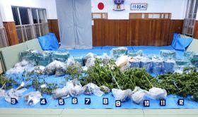 北海道警が押収した乾燥大麻約30キロなど=北海道警江差署(北海道警察本部提供)