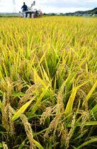 実りの季節を迎え、青森県南地方の水田では稲刈り作業が本格化している=19日、八戸市尻内地区