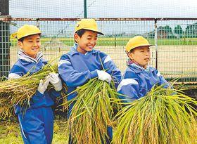 刈り取った稲を運ぶ児童