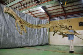 首長竜の全身骨格のレプリカについて説明する東京学芸大の佐藤たまき准教授=13日午後、北海道むかわ町