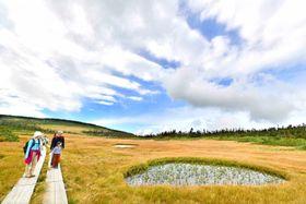 青空の下、八幡沼湿原を一面黄色く染める草紅葉=15日、八幡平市・八幡平