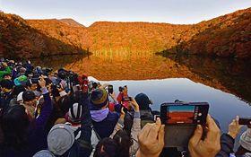紅葉が見ごろとなり、多くのカメラマンや観光客が訪れている蔦沼=21日午前6時半ごろ、十和田市