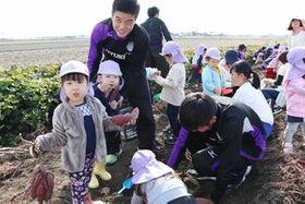 初めて育てた芋を園児らと収穫する龍谷高サッカー部員=佐賀市北川副町
