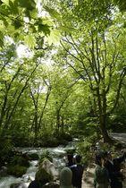 新緑の奥入瀬渓流で写真撮影を楽しむ観光客=22日午後、十和田市