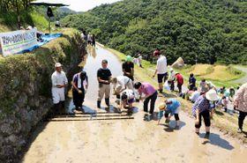 地元農家や町職員の指導を受けながら田植えに挑戦する参加者=香川県小豆島町中山