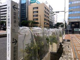 台風14号接近に伴い歩道の植栽も台風対策=11日午後、那覇市久茂地