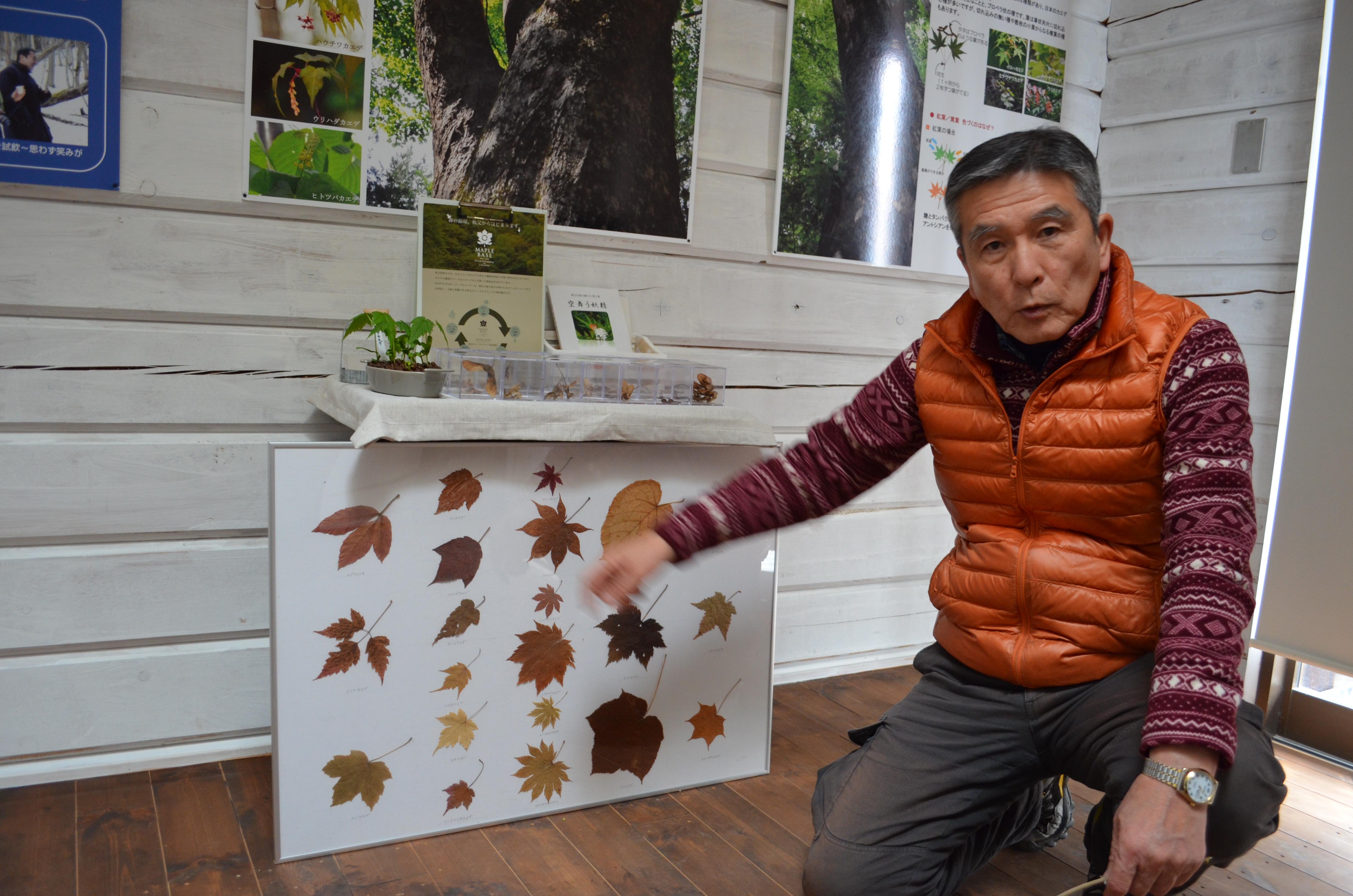 自生するカエデについて解説する島崎武重郎さん。植樹では土地本来の植生を調べて樹種を選定、樹液採取後のカエデの健康管理も徹底している。