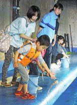 サメの餌やり体験で、プールにイカを投げ入れる参加者